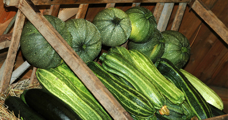 Courgettes facebook 1